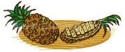 タンパク質分解酵素と果物