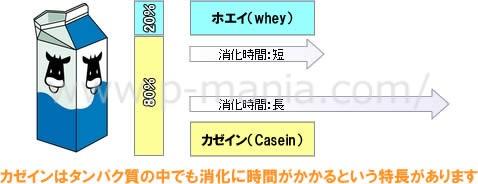 カゼインはタンパク質の中でも消化に時間がかかるという特長があります
