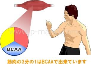 筋肉の3分の1はBCAAで出来ています