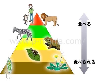 食物連鎖のピラミッド