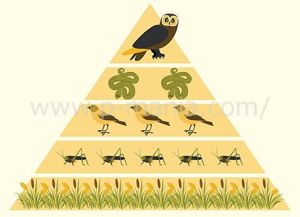 食物繊維ピラミッド